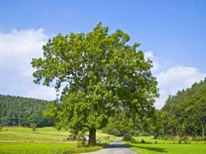 Glokal Change Okosystem Wald Gewusst Wie Baumarten Spiel